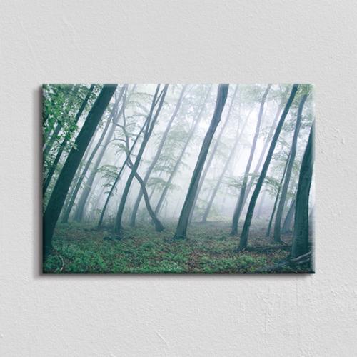 Vászonkép - ködös erdő