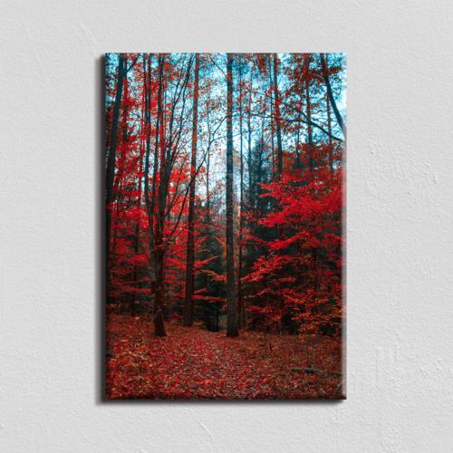 Vászonkép - őszi erdő