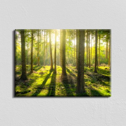 Vászonkép - napfényes erdő - 40x60 cm