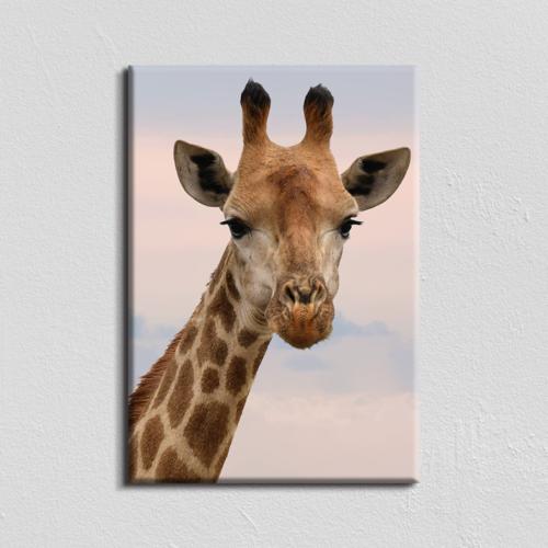 Vászonkép - zsiráf - 40x60 cm
