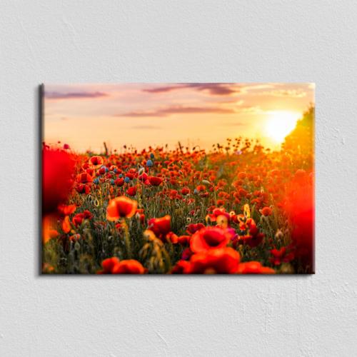 Vászonkép - pipacsmező - 40x60 cm