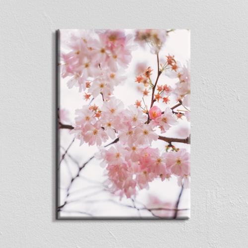 Vászonkép - cseresznyevirág - 40x60 cm